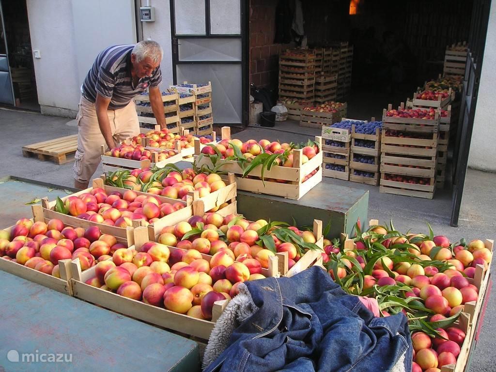 Lekker fruit! Net geoogst. De buren laten jullie ervan proeven... Hun erf ligt op 50m van Villa Vinca