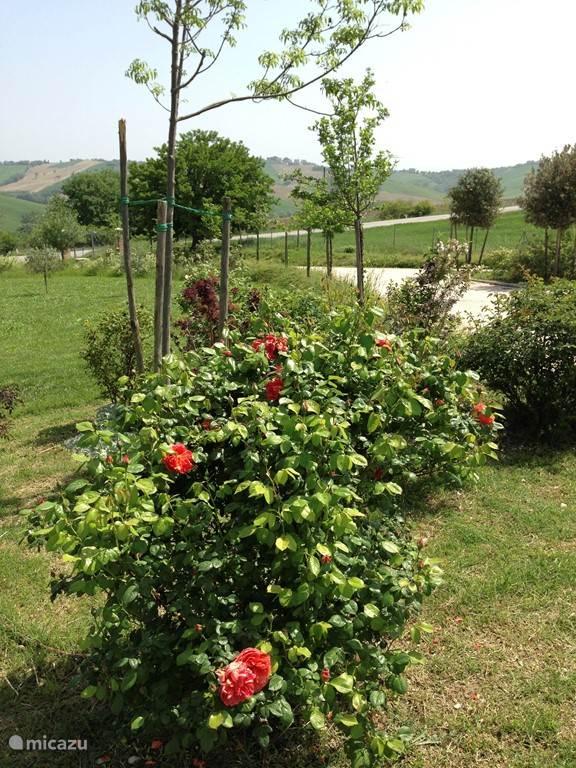 De tuin (1 hectare) staat vol met prachtige (fruit)bomen en struiken