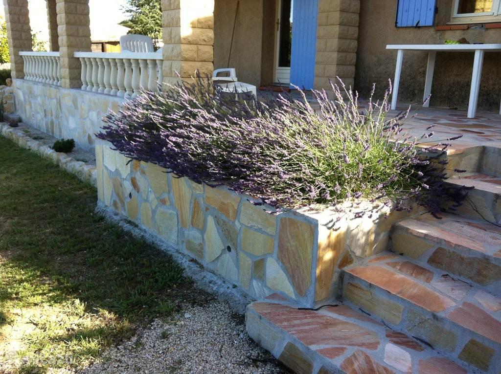 Lavendel bij terras keuken