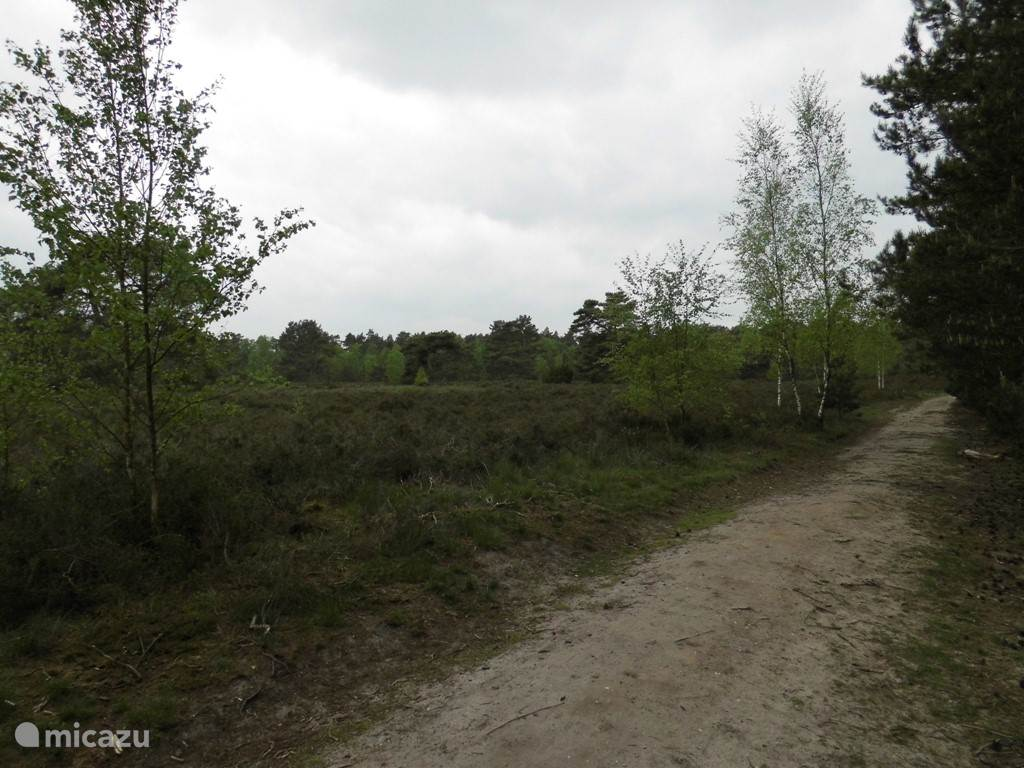 Op 600 meter afstand. Wandelen of fietsen in bos en over de hei met de bekende Veluwse grafheuvels