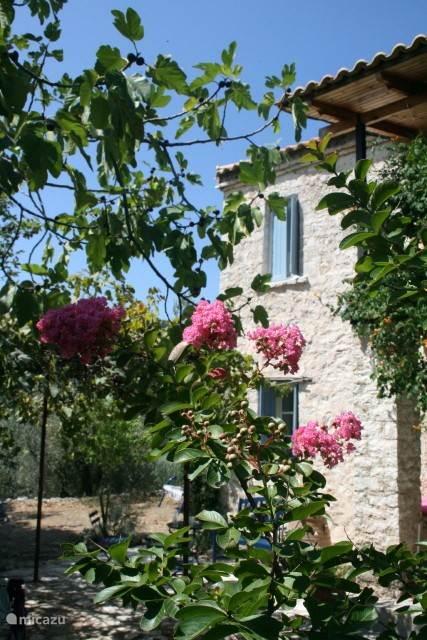 Vacation rental Greece, Epirus, Ano Kotsanopoulon-Preveza - finca Unita- Elfrink