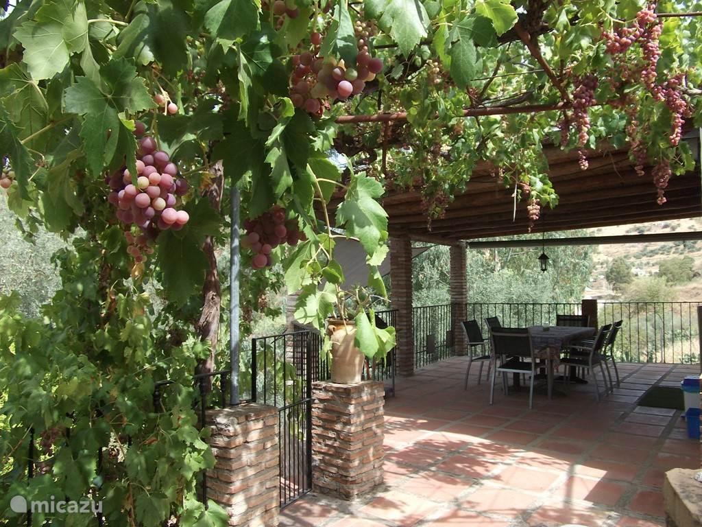 uw terras, zowel schaduw als zon, onder de druiven...met gas BBQ.