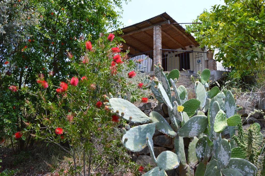 Heerlijke temperaturen, rust en ruimte op het Andalusische platteland, de costa én cultuur vlakbij... juni/juli € 375,- pw !