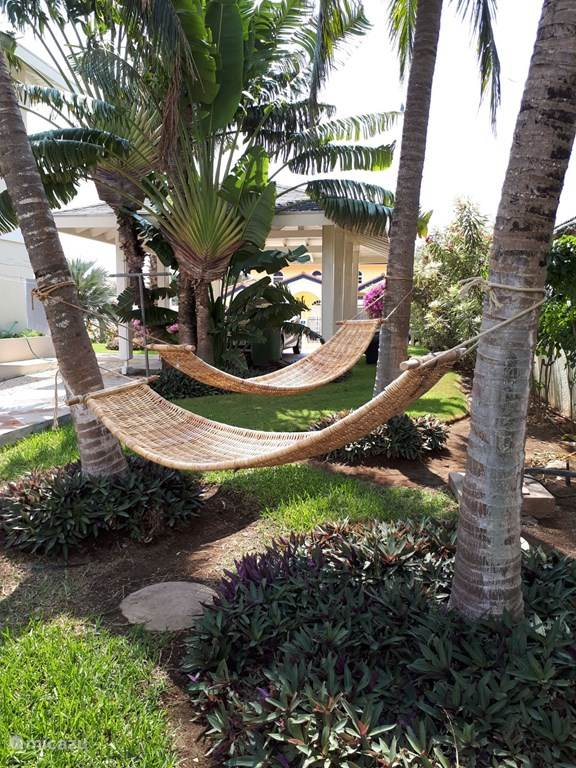 chilling under the palmtree!