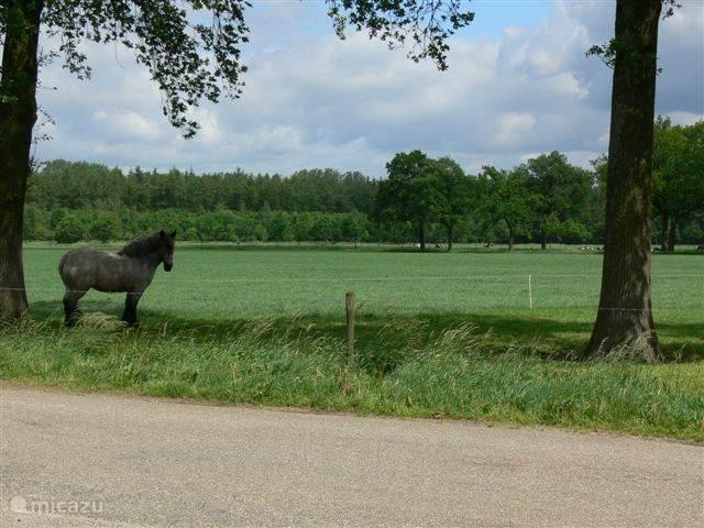 Omgeving en ons paard Helga.