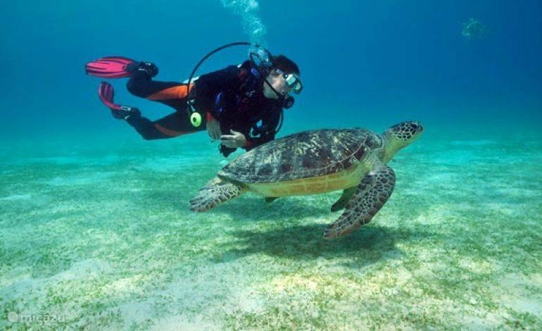 Prachtig snorkelen in de baaien op loopafstand, en spectaculair duiken bij Tarifa