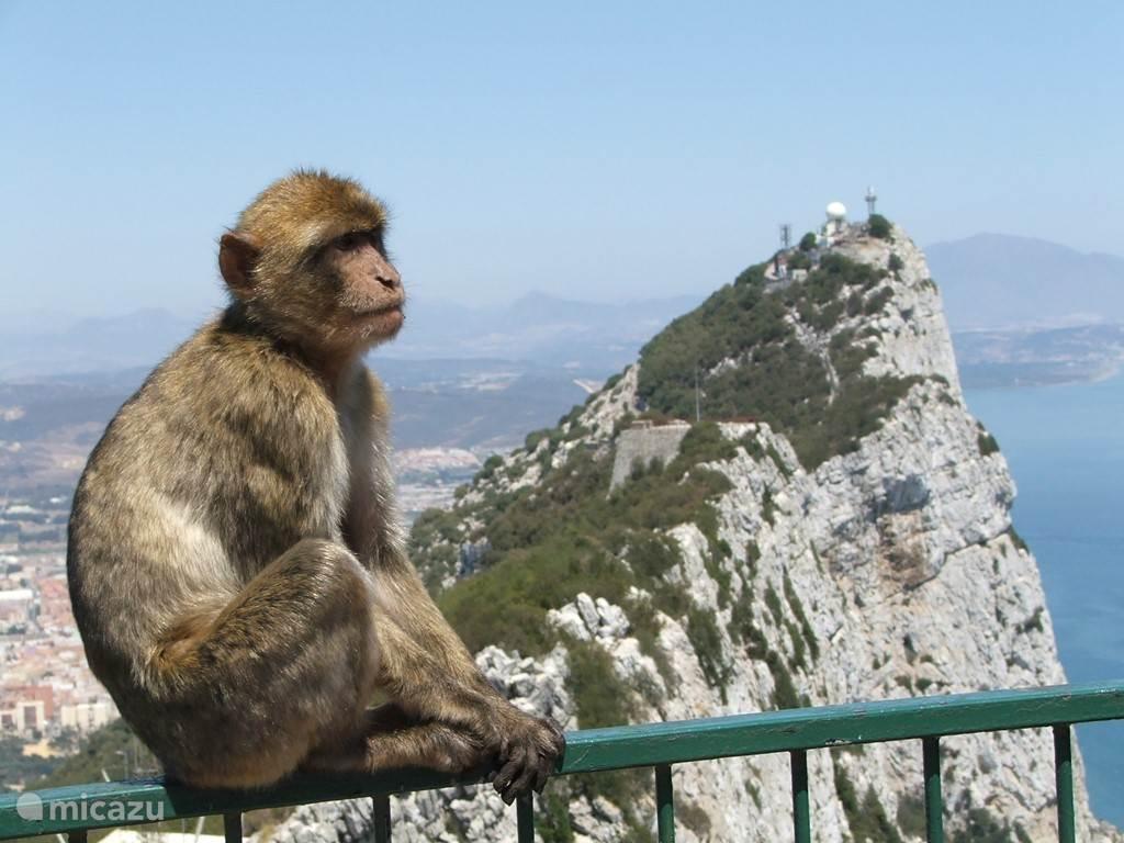 Op een steenworp afstand: Gibraltar, met haar kenmerkende rots, en de bekende wilde apen, en ook prachtige grotten