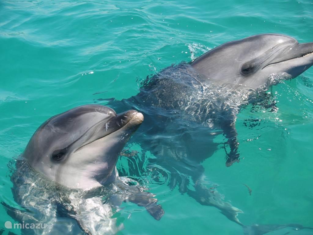 Zwemmen met dolfijnen in zee