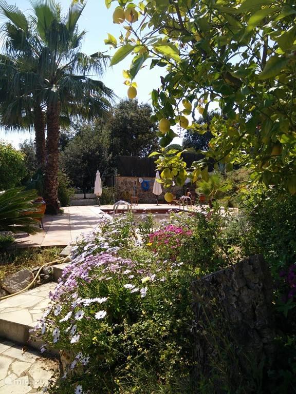Treetjes naar de tuin en het zwembad.