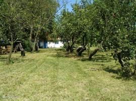 De oude boomgaard