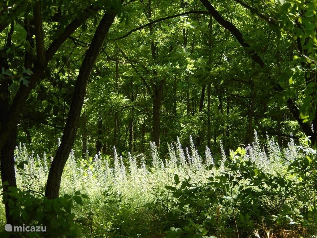 Bos en wilde bloemen in overvloed