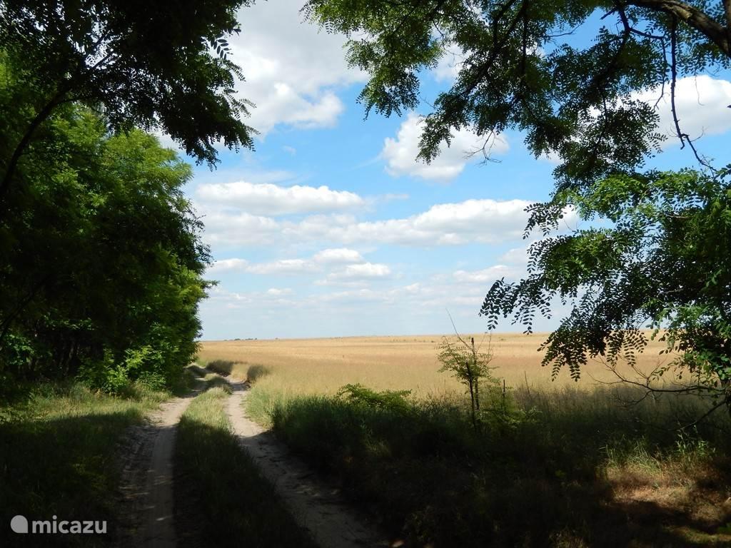Prachtige omgeving voor lange wandelingen