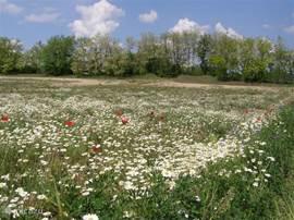 Bloemenzee in het voorjaar