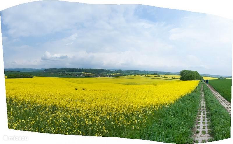 Lente in Klettenberg met in boei staande koolzaad velden