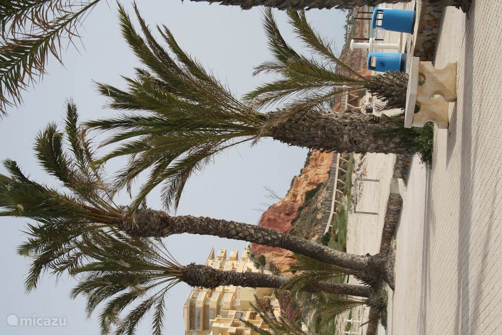 boulevard in Cabo Roig