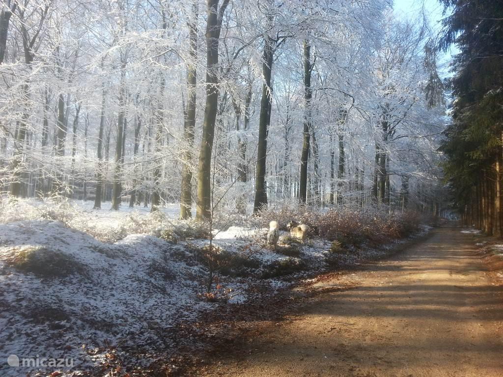 Wandelen is in het Nationaal Park Utrechtse Heuvelrug altijd prachtig. Elk jaargetijde is het hier mooi. Er zijn nog rustige plekjes in Nederland!  Voor de hondenbezitters, er is een groot honden-losloopgebied op 50 mtr. afstand van het huisje, waar uw hond(en) heerlijk vrij kan/kunnen rennen.