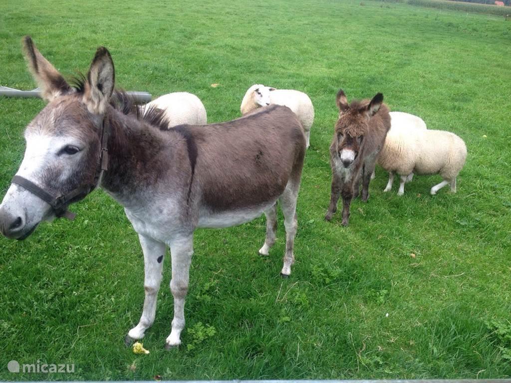Luna en zoontje Bo, de ezeltjes op de boerderij