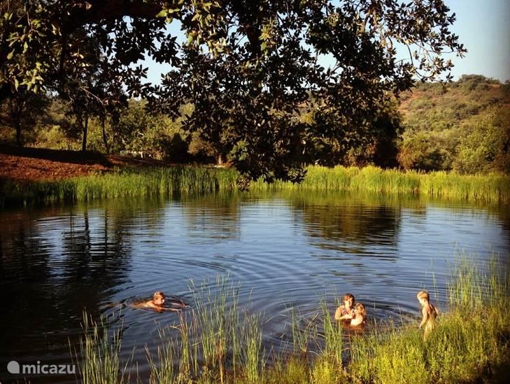 Zwemmen met de kinderen in het meer