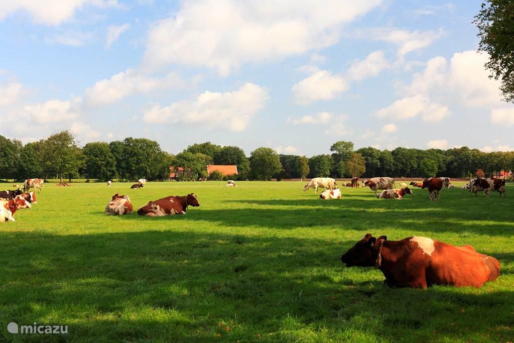 Dit is een van de vele mooie uitzichten die je ziet als je rondfietst door de buurtschappen van Winterswijk!