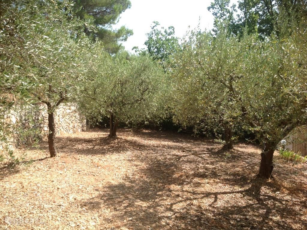 Deel van de olijfgaard