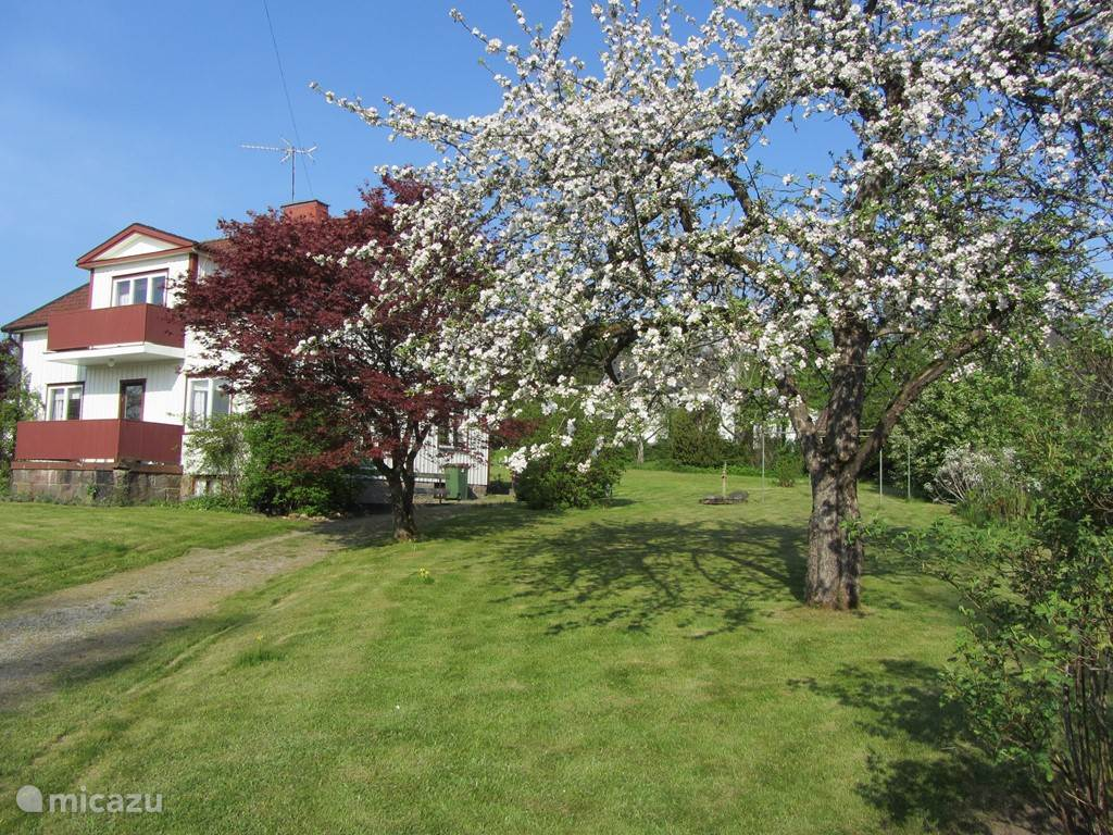 Voorjaar met appelbomen in bloei.