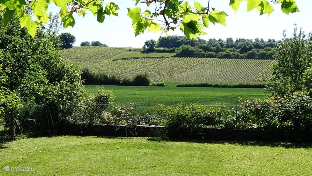 vrij uitzicht op de wijnvelden