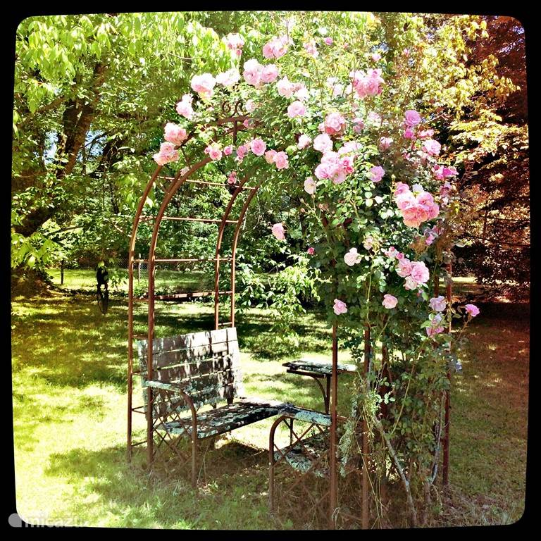 Pergola with roses. Our passion. One of the most romantic spots on the estate.