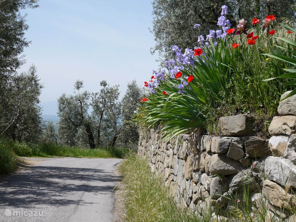 Voorjaarbloemen langs het weggetje bij huis