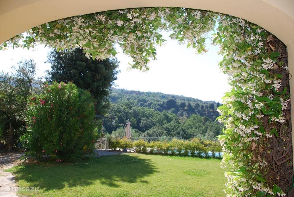 Prachtige Italiaanse jasmijn