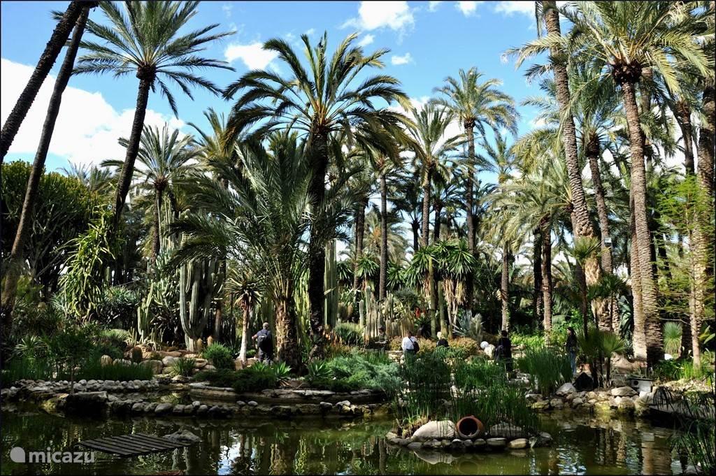 Palm stad Elche