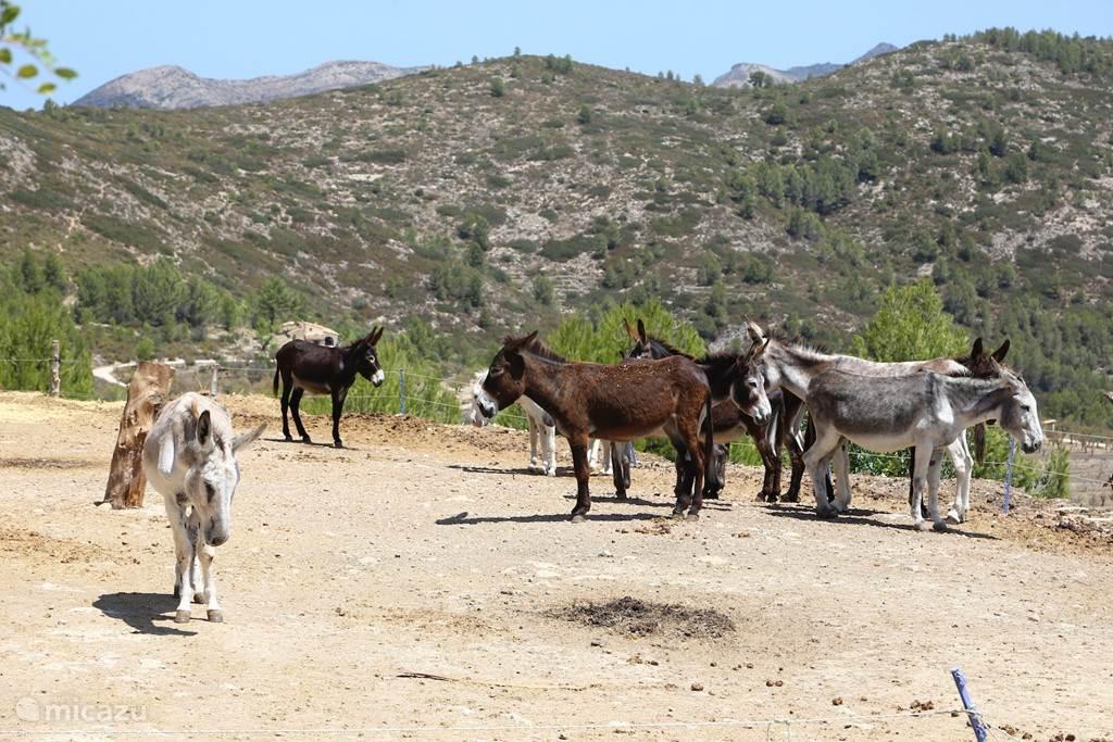 Een ezel opvangcentrum in de bergen.
