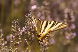 De tuin rondom Casa Pancrasia bestaat uit een divers geheel van flora en fauna.