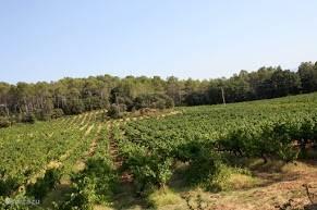 De wijngaarden van Chateau de la Martinette.