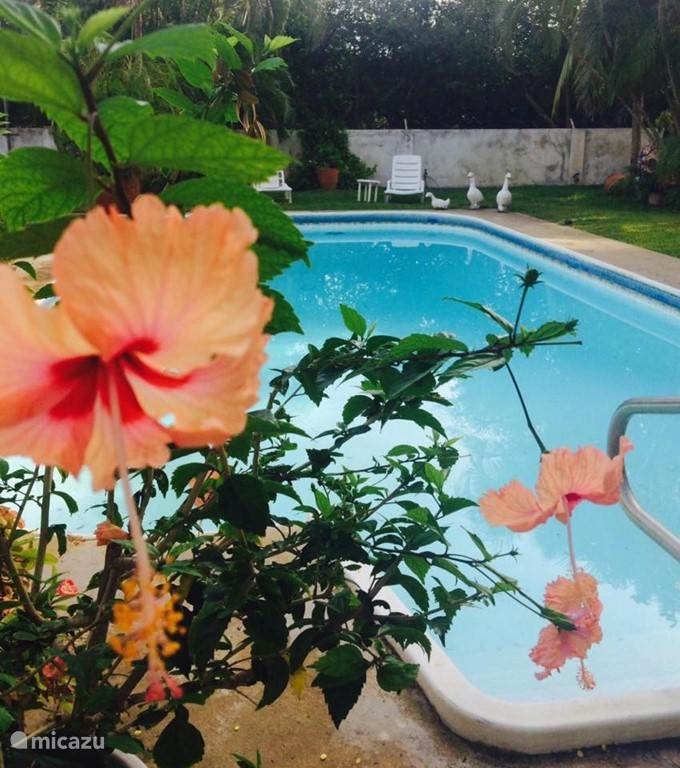 Zwemmen en genieten van de tuin van Villa Suzanna. Altijd bloeien er bloemen in deze tropische verrassing met plek in  de zon en de schaduw.