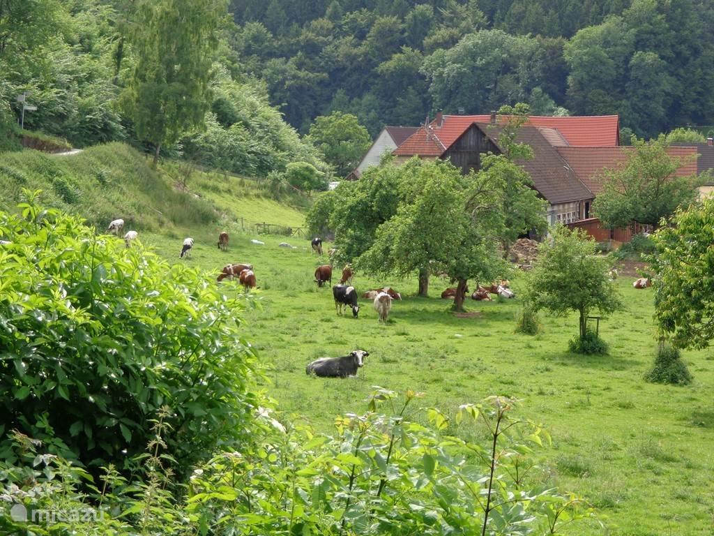 Boerenhoeve in Altenaudal