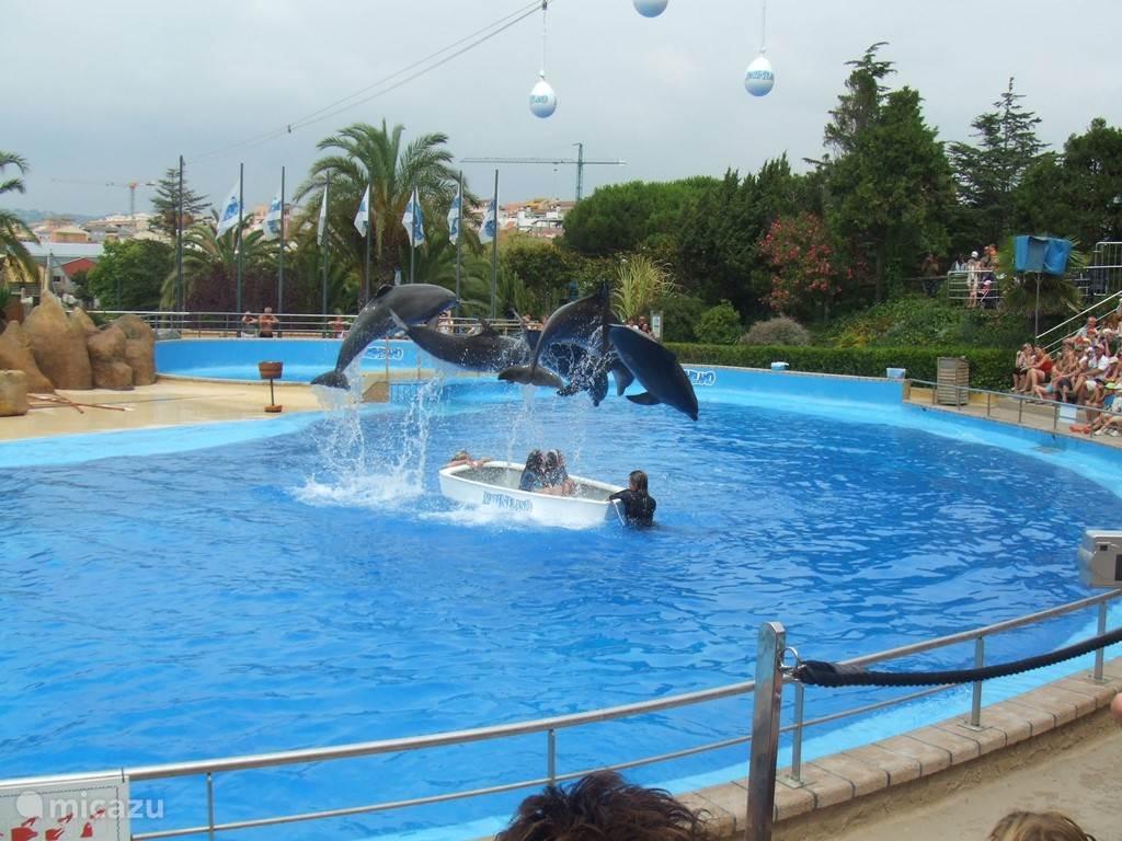 Dolfijnen show in attractiepark Marineland in Palafolls