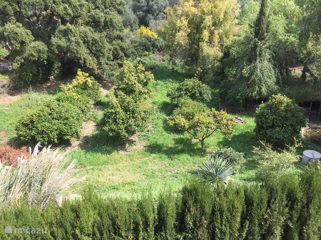 Tuin met 8 verschillende fruitbomen