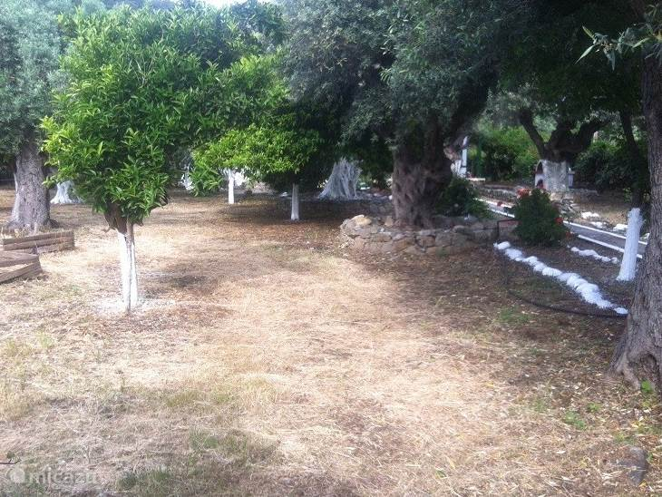 Fruit trees and olive groves in the large surrounding garden