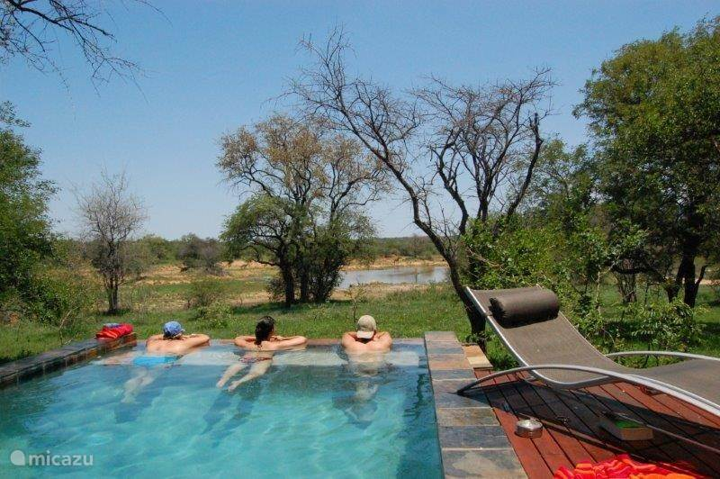 Molori Safari Lodge, South Africa: A wonderful Game Reserve | Blog ...