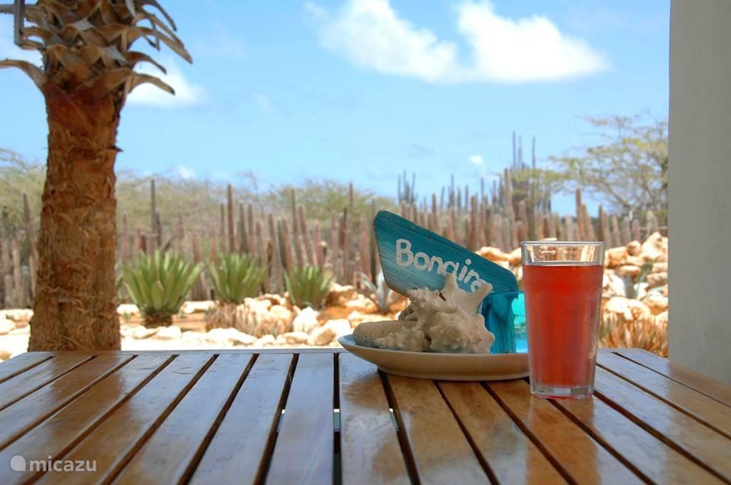 Bonaire16 heeft een tuin met inheemse planten, salamanders landkrabben en heel veel vogels