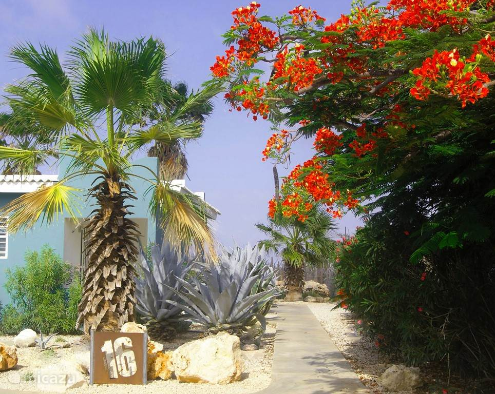 Bonaire16, the entrance with beautifully flowering Flamboyant (April-May)
