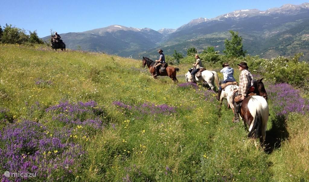 Vakantiehuis Tsjechië, Vysocina, Horni Cerekev Vakantiehuis Villa happy paardrij vakantie