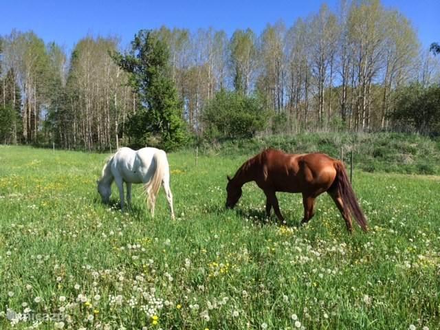 Uitzicht op de paardenwei