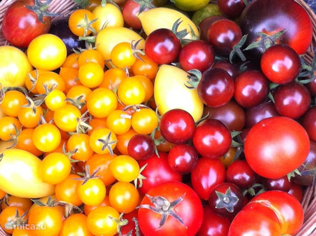 Prachtige tomaten van Jan Andersson.
