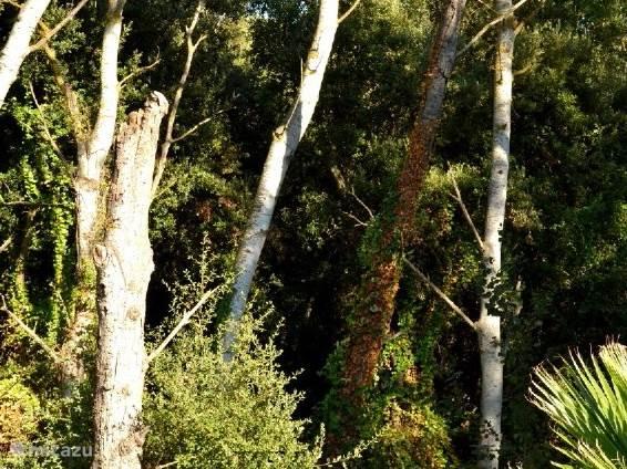 De villa ligt aan een bosrand waar u heerlijke wandelingen kunt maken