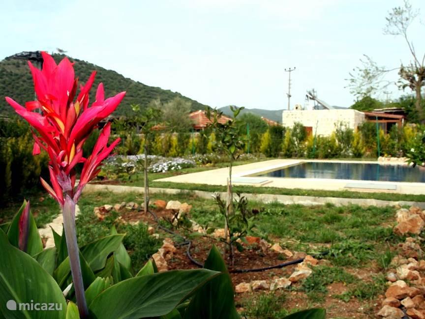 tuin en zwembad van luvi