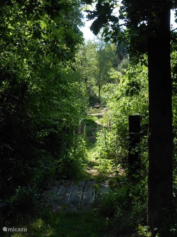 Weggetje naar het bos
