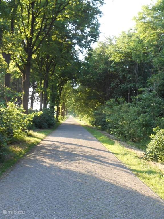 De Koekangerveldweg