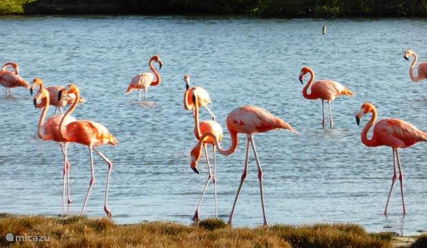 spotting flamingos near the resort.