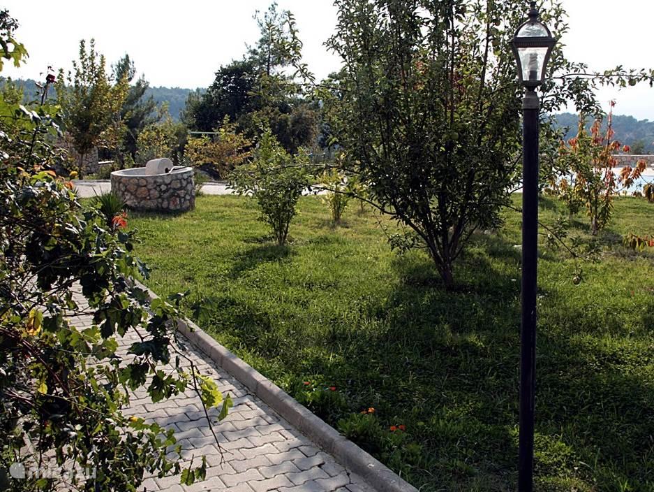 grote tuin met fruit en olijfbomen